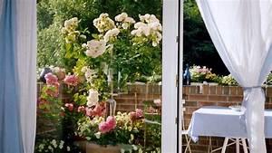 Rosen Für Balkon : ein berblick rosen auf dem balkon ein gewinn ~ Michelbontemps.com Haus und Dekorationen