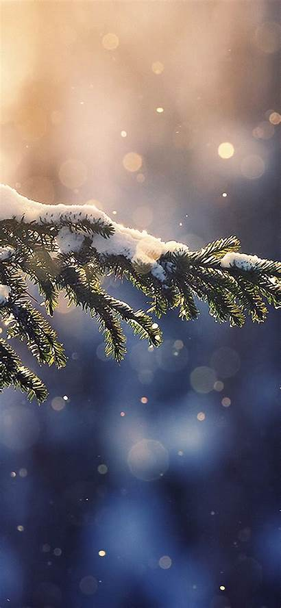 Iphone Winter Wallpapers Nature 4k Christmas Tree