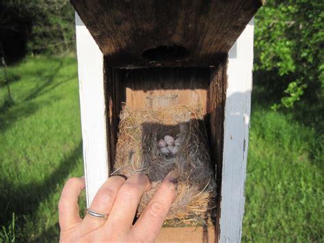 nestwatch chickadee nest box nestwatch