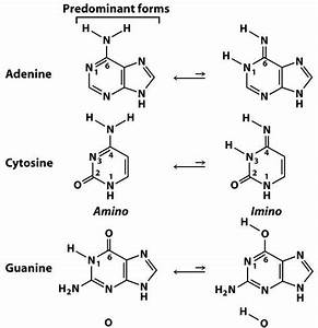 Sandwalk: Tautomers of Adenine, Cytosine, Guanine, and Thymine