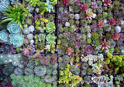 indoor succulent garden indoor succulent garden design your revolution