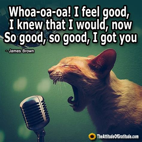 I Feel Good Meme - related cat pic with quotes funny sayings from a kitty memes