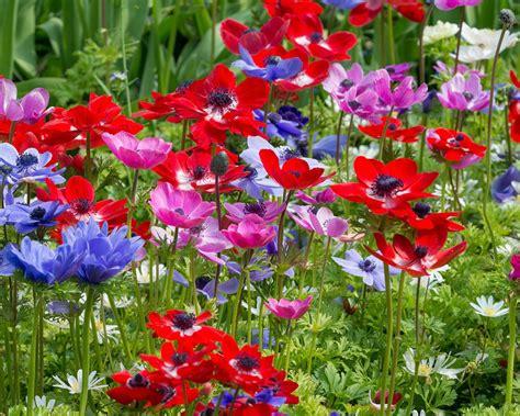 Gefüllte Anemonen Pflanzzeit by 12 Plants That Grow Well In Shade The Self