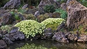 Bilder Von Steingärten : der steingarten solide gartengestaltung tipps tricks vom g rtner garten und gr nanlagen ~ Indierocktalk.com Haus und Dekorationen