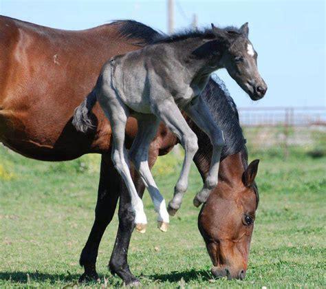 exuberant horses   brighten  day wide