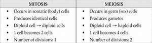 A Closer Look At Meiosis - Cell Reproduction