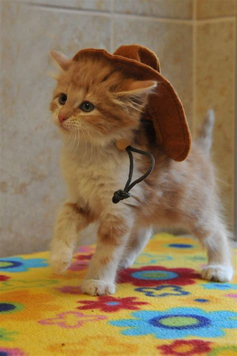 Cowboy Kitty Cute Cats In Hats