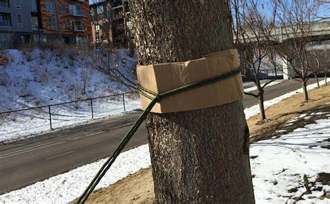 How To Use Hammock Tree Straps by 35 Adventure Hammock