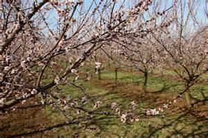 Welche Bäume Blühen Jetzt : mein outdoorerlebnis heute ~ Buech-reservation.com Haus und Dekorationen
