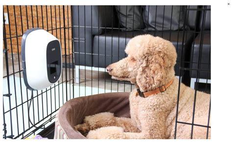 petchatz review dog treat dispenser  camera  dogs