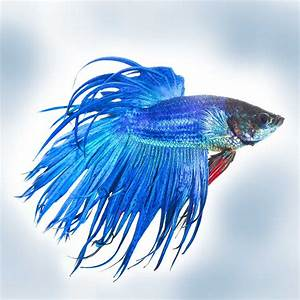 Causes Symptoms Treatment Of Fish Fin Rot Fish