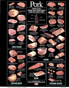 Artery Diagram Pork