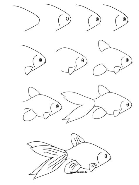 draw  fish step  step mesothelial cells