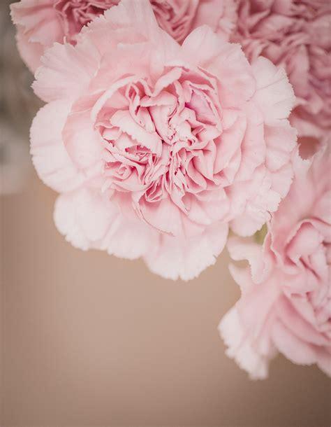 Rosa Blumen by Banco De Imagens Flor Plantar Flor P 233 Tala Vermelho