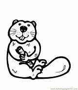 Beaver Coloring Pages Printable Sheets Oregon State Sheet Osu Beavers Decal Template Decals Cartoon Animals Football Colouring Coloringpages101 Stickers Templates sketch template