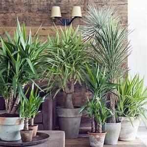 Zimmerpflanzen Für Schlafzimmer : zimmerpflanzen f rs schlafzimmer wohndesign ~ A.2002-acura-tl-radio.info Haus und Dekorationen