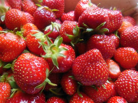 when is strawberry season strawberry picking expect the unexpected