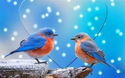 Birds Wallpapers Desktop Backgrounds Keywords