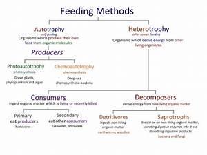 Ib Biology Ecology Optional Topic C 2015
