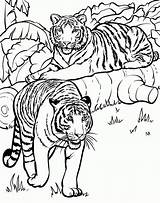 Coloring Tiger Pages Older sketch template