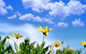 sunny, springtime, wallpapers