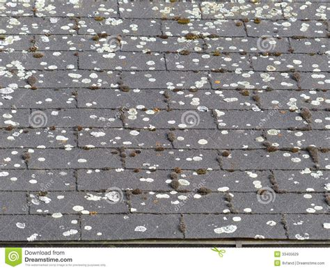 Moss On A Roof Royalty Free Stock Images Mod Bit Roofing Roof For Gazebo Companies Atlanta Able Columbus Ohio Red Inn Carrier Circle Cantilever Truss Design Rack Wrangler Unlimited North Star