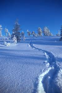 Winter Snow Path