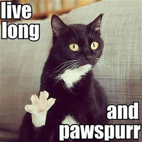 Cat Happy Birthday Meme - best happy birthday cat meme