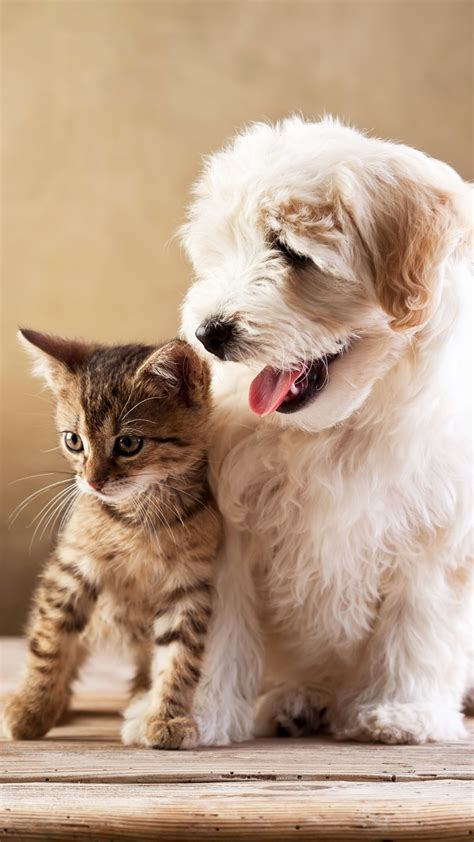 wallpaper puppy kitten funny animals  animals