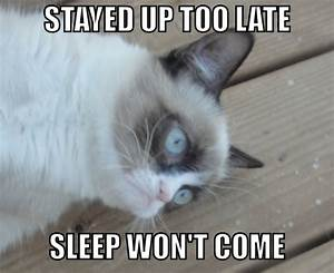 Grumpy Cat: sleep won't come | Grumpy Cat | Know Your Meme