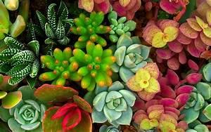 Entretien Plantes Grasses : vid o jardinage l 39 entretien des plantes grasses en cinq conseils ~ Melissatoandfro.com Idées de Décoration