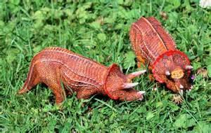 Most Dangerous Animals New Zealand