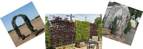 new plants kushners garden patio