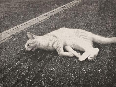 Dead Cat  Flickr  Photo Sharing