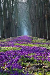 Forest Path with Purple Flowers
