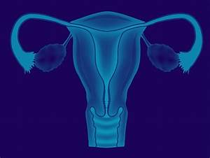The High-tech Future Of The Uterus