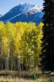 Scenic Fall Color Drives Colorado