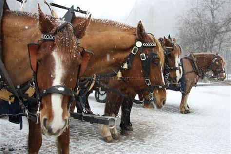 carrozze per cavalli weekend d inverno engadina gita in carrozza nella val di fex