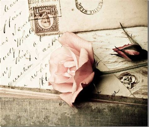 shabby chic photography vintage rose nature photography vintage nostalgia victorian romance shabby chic flower photo