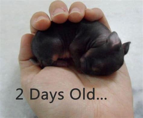 Baby Bunny ? 1Funny.com