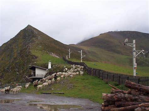 chambre agriculture drome le loup dans le haut diois pastoralisme chambre d