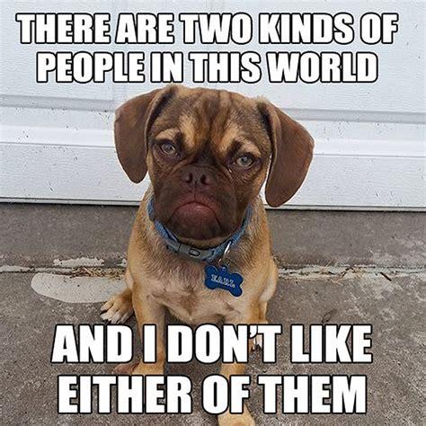 Grumpy Dog Meme - the 10 best memes of grumpy dog this dog s life dog community adoption stories rescues