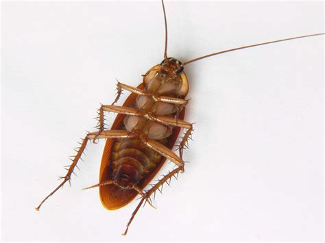 cockroaches in garage how to get rid of roaches in your garage
