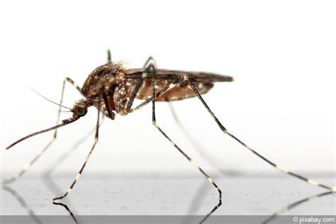 Was Tun Gegen Stechmücken by M 252 Cken Stechm 252 Cken Am Gartenteich Was Tun Gegen