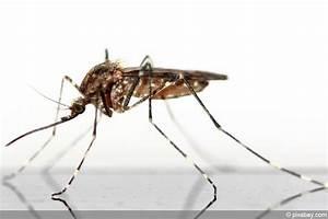 Mückenplage Im Haus : m cken stechm cken am gartenteich was tun gegen m ckenlarven ~ Orissabook.com Haus und Dekorationen