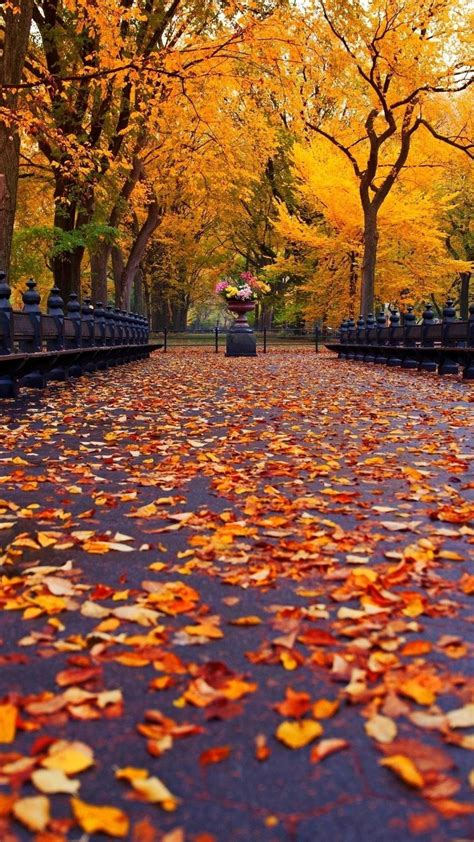 Fall Themed Wallpaper Iphone by Fall Pictures For Wallpapers 70 Background Pictures