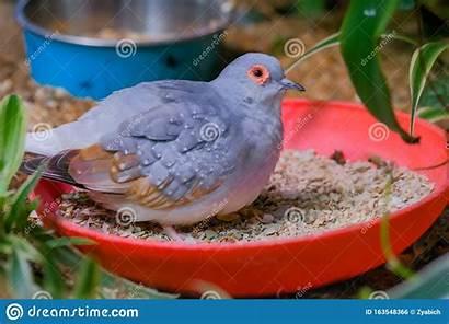 Dove Diamond Bird Cage Exotic Wildlife Concept