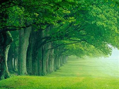 Trees Wallpapers Backgrounds Tree Desktop Nature Cool