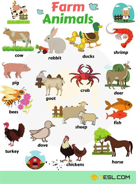English Vocabulary Learn Animal Names  Farm Animals  Pinterest  Toothless, Zoos And English
