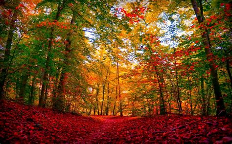 Autumn Wallpapers by Autumn Forest Carpet Wallpapers Autumn Forest